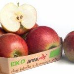 Ekološka jabolka Antares