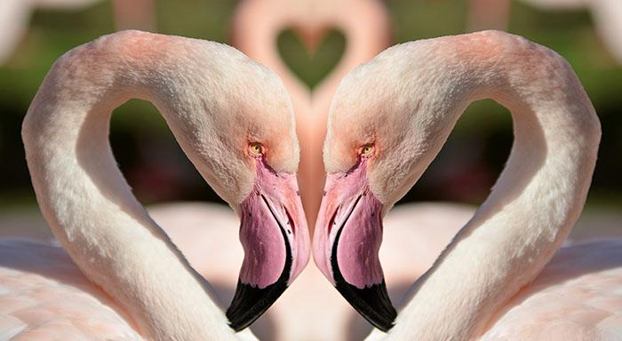 birds-1357664_web