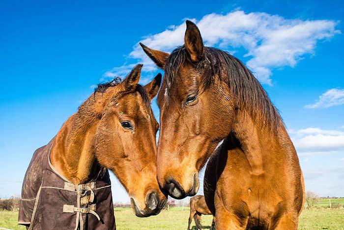 horses-1078676_web