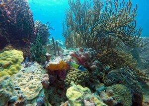 Koralni grebeni