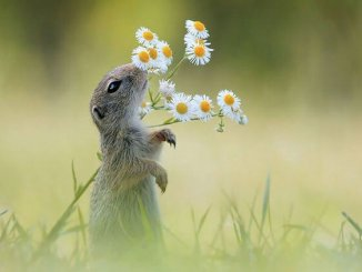 animals-smelling-flowers-3_naslovna