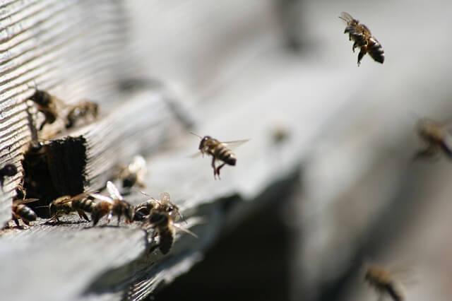 urbani čebelar