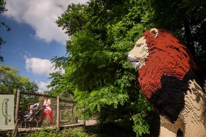 belgium-zoo-lego-liion