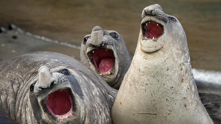 Najbolj smešne fotografije divjega živalskega sveta