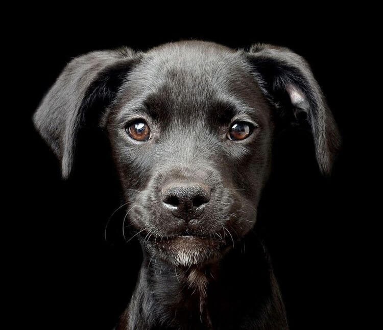 dog-photographer-winners-5