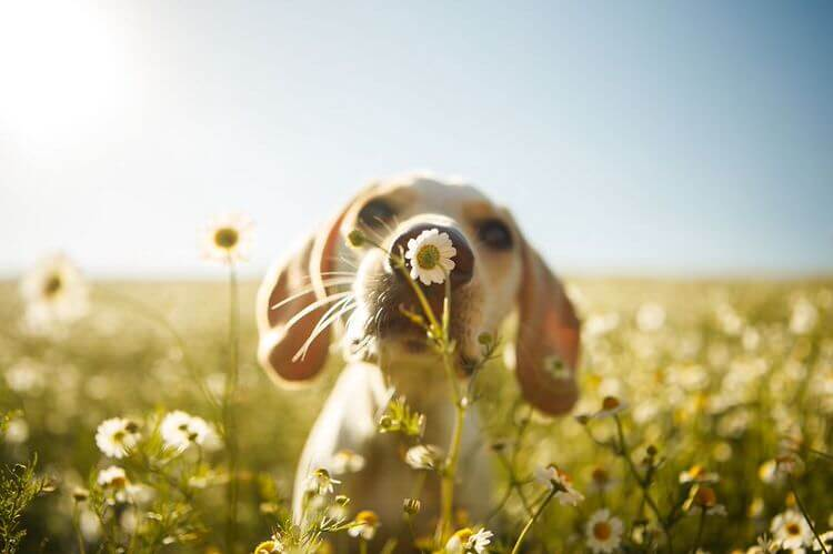dog-photographer-winners-6