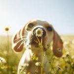 13 najboljših pasjih fotografij