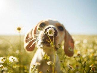 dog-photographer-winners-6_naslovna