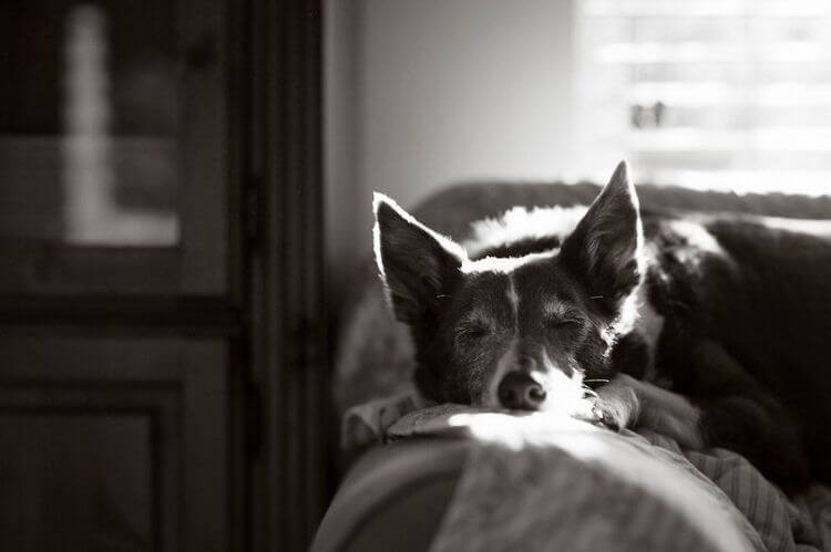 dog-photographer-winners-7