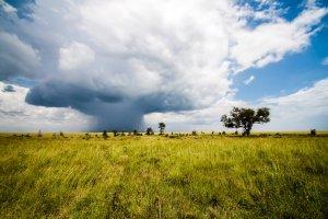 Nenadna nevihta (Rita La Visi Visigalli, Serengeti, Tanzanija)