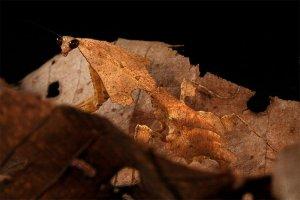 amazing-wild-animal-camouflage-nature-51-592817f757336__700