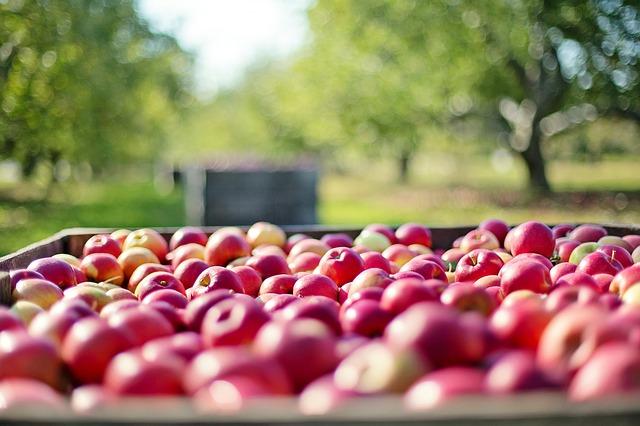 Zadruge letno odkupijo 80 % za trg pridelane hrane