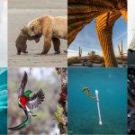 Finalne fotografije divjega sveta 2017 v Naravoslovnem muzeju v Angliji