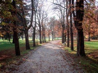 Ljubljana jeseni - Ljubljana se inovativno bori proti tujerodnim invazivnim vrstam (Foto:  Dean Dubokovič, Vir: STO