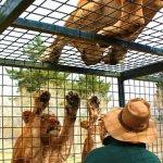 Živalski vrt, kjer so v kletkah obiskovalci