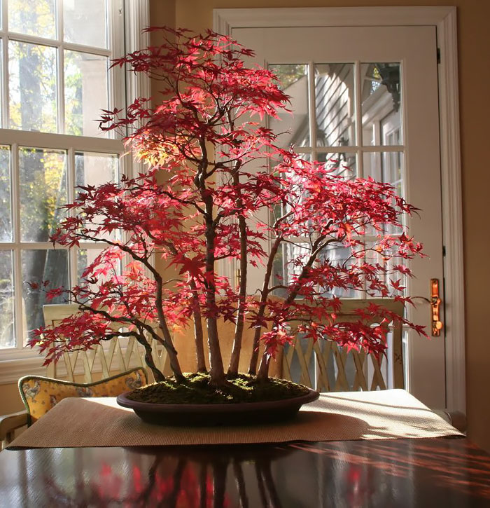 amazing-bonsai-trees-1