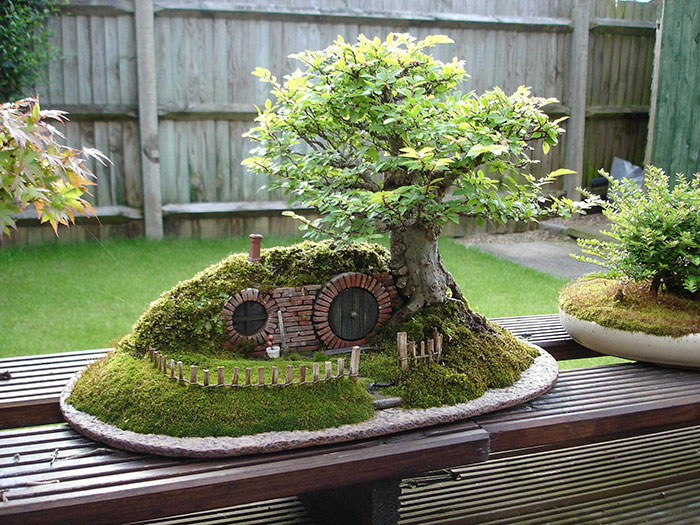 amazing-bonsai-trees-11