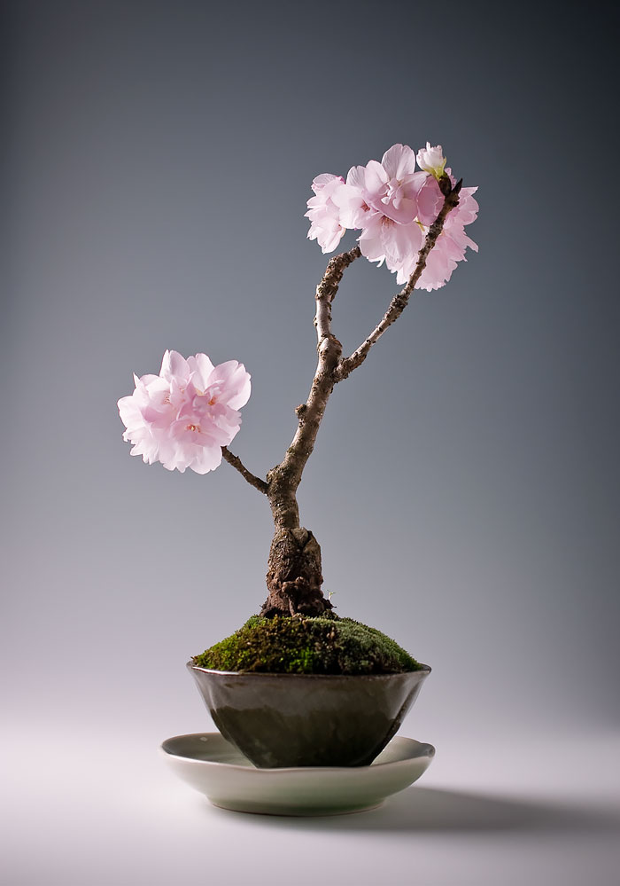 amazing-bonsai-trees-12