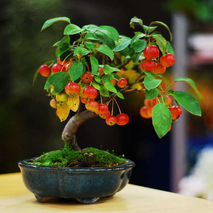 amazing-bonsai-trees-13