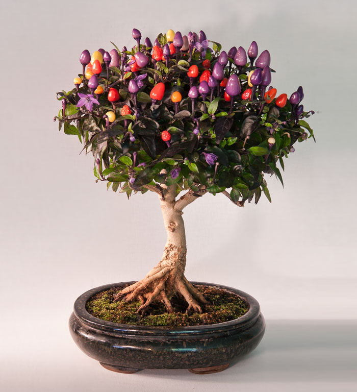 amazing-bonsai-trees-14