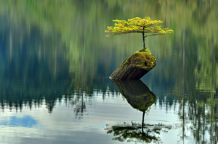 amazing-bonsai-trees-15