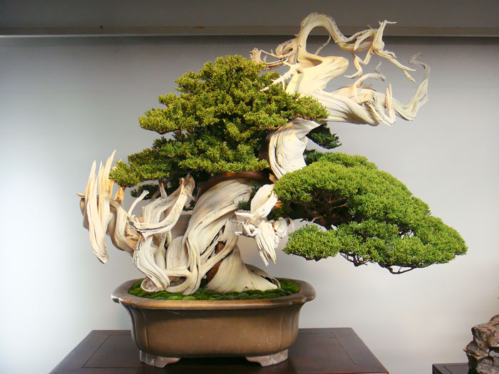 amazing-bonsai-trees-4