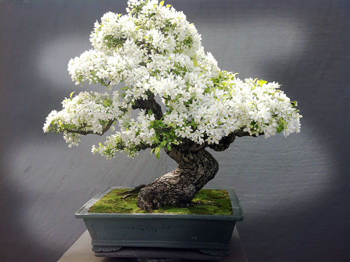 amazing-bonsai-trees-5