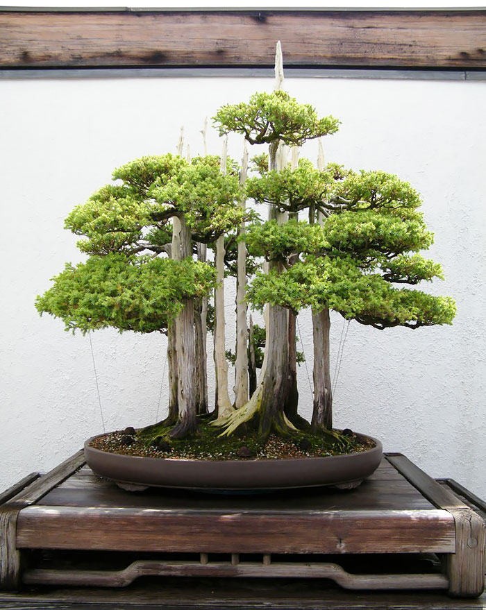 amazing-bonsai-trees-6