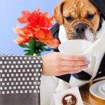 V Zagrebu svoja vrata odpira prva pasja restavracija