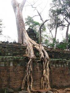 tree-roots-concrete-pavement-10