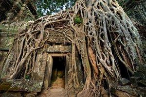 tree-roots-concrete-pavement-11