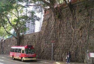 tree-roots-concrete-pavement-6