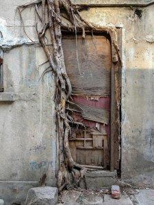 tree-roots-concrete-pavement-8