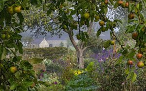 Avgustovska kulisa sadja in rož v Walesu (foto: Nigel McCall)
