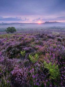 Preproga jesenske vrese v Narodnem parku Stoborough Heath (foto: Mark Bauer)