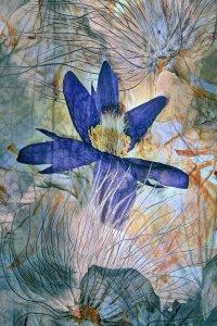 Kompozicija posušenih rož (foto: Frantisek Rerucha)