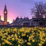 Kampanja za zasaditev 9 milijonov divjega cvetja v Londonu