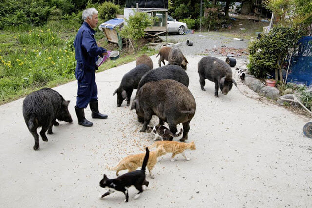 fukushima-animals-2
