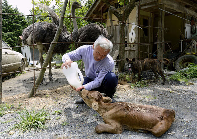 fukushima-animals-5