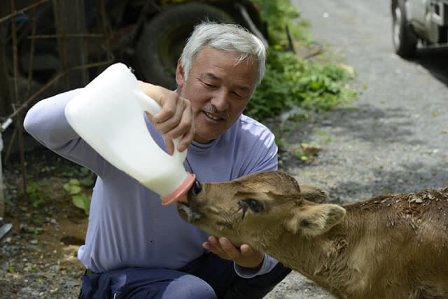 fukushima-animals-7