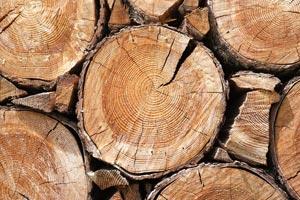 gozdno-lesna-veriga-2
