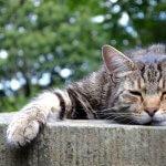 Majhno mesto zgrajeno le za brezdomne mačke
