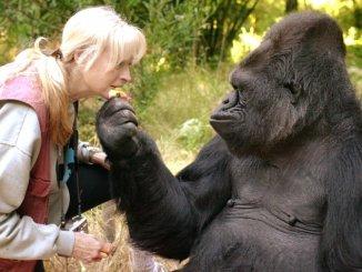 Koko in njena skrbnica Penny
