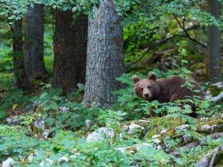 Foto: Christine Sonvilla (www.slovenia.info)