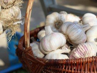 Avtohtoni istrski česen je prepoznaven po rdeči ovojni lupini, velikih zdravih strokih in bogatem okusu. (foto: Turistično združenje Portorož)