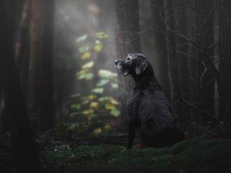 "Zmagovalna fotografija ""The Lady of the Mystery Forest"", Monica van der Maden"