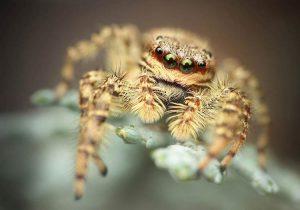 """""""Jumping Spider"""", Richard Kubica, Slovaška"""