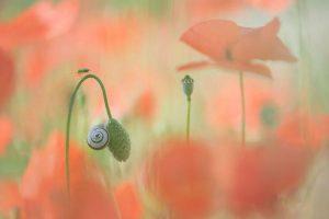 """It's a Small World"", Trui Heinhuis, Španija"