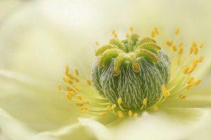 """""""Poppy"""", Jane Dibnah, Anglija"""