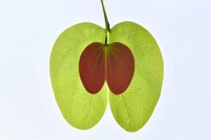 """""""Green Apple"""", Zhang Lihua, Kitajska"""